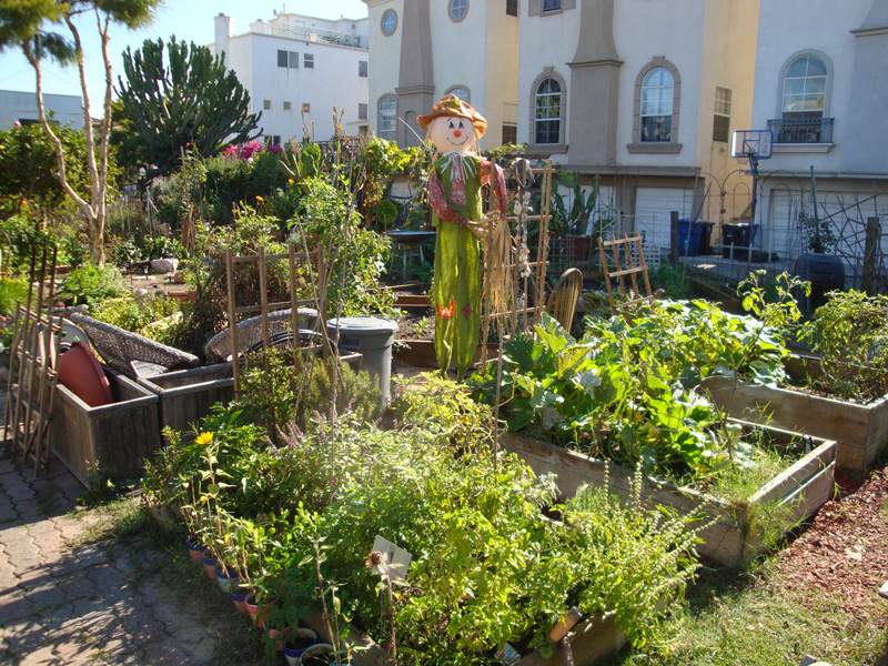 City Seeks New Manager for Community Garden | The Ones
